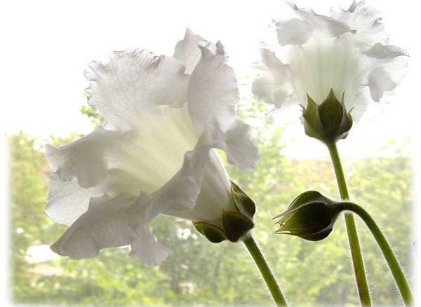 http://forum.projanmo.com/uploads/2007/10/542_flower6.jpg