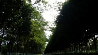 http://forum.projanmo.com/uploads/2008/02/109_road.JPG